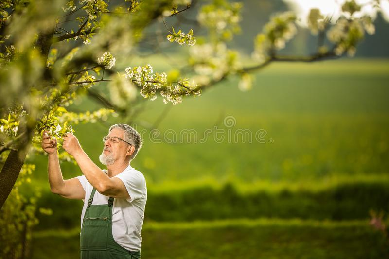 Portrait of senior man gardening stock image