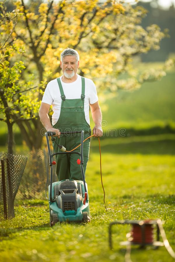 Portrait of senior man gardening, taking care of his lovely orchard stock photo