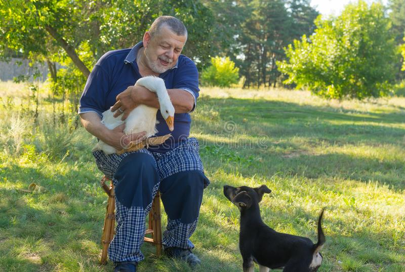 Portrait of senior man introducing black puppy to his cute friend white goose stock image