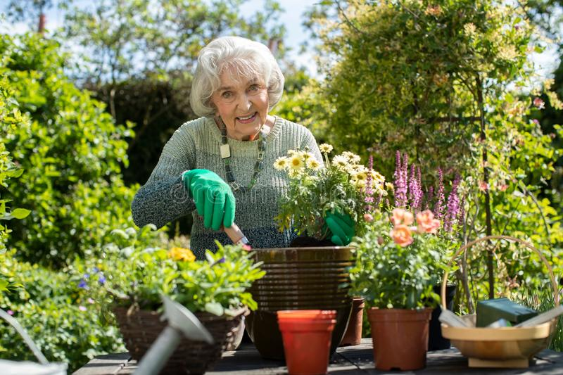 Portrait Of Senior Woman Potting Plant In Garden At Home stock images