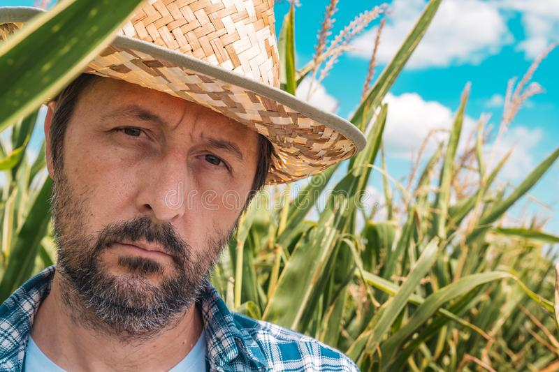 Portrait of serious agronomist in corn maize field royalty free stock photos