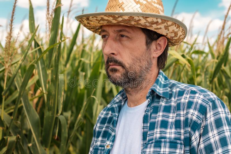 Portrait of serious corn farmer in maize field stock images