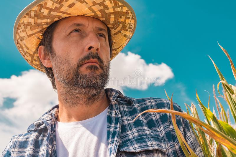 Portrait of serious farmer in corn maize field stock image