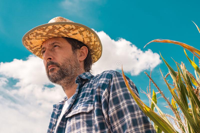 Portrait of serious farmer in corn maize field royalty free stock photos