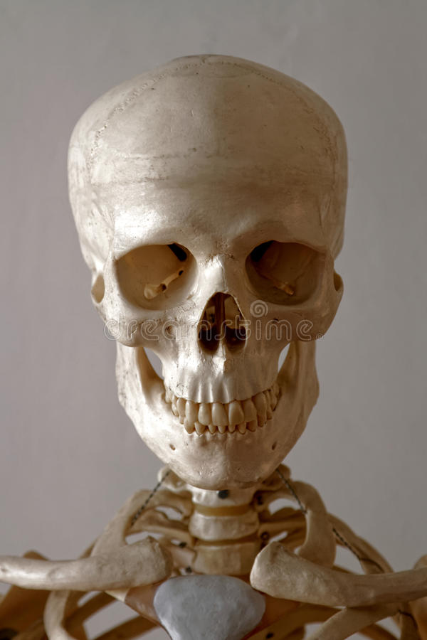 Portrait of a Skeleton royalty free stock images