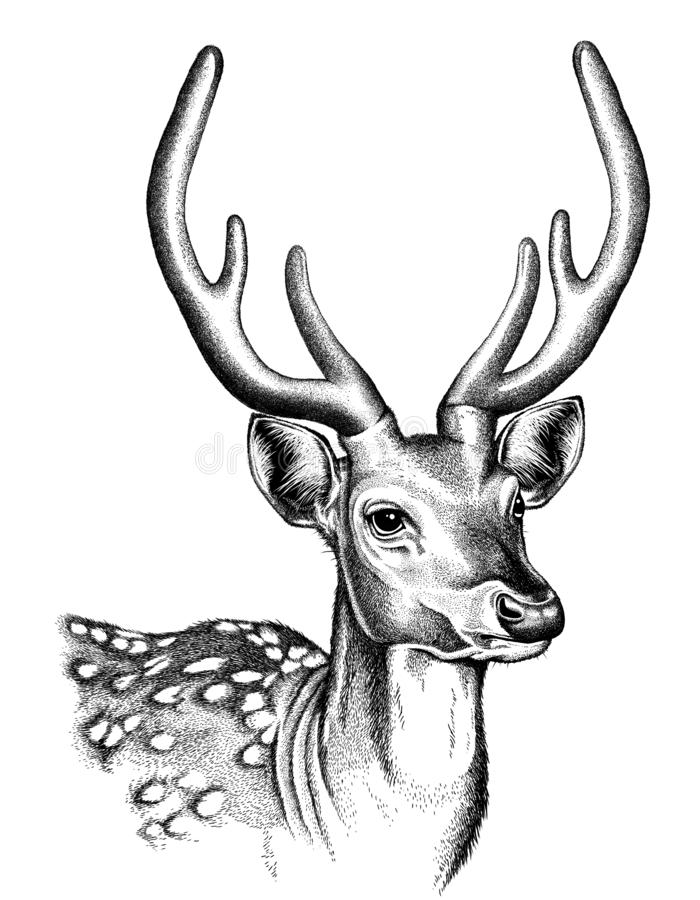 Portrait sketch of a Spotted Deer face. In black and white vector illustration