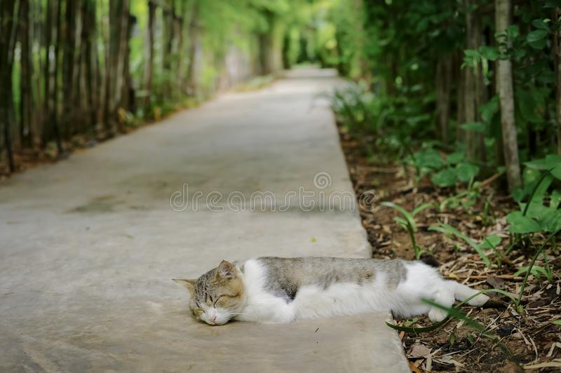 Portrait of sleeping cat with blurred background of bamboo garden and cement floor stock photos