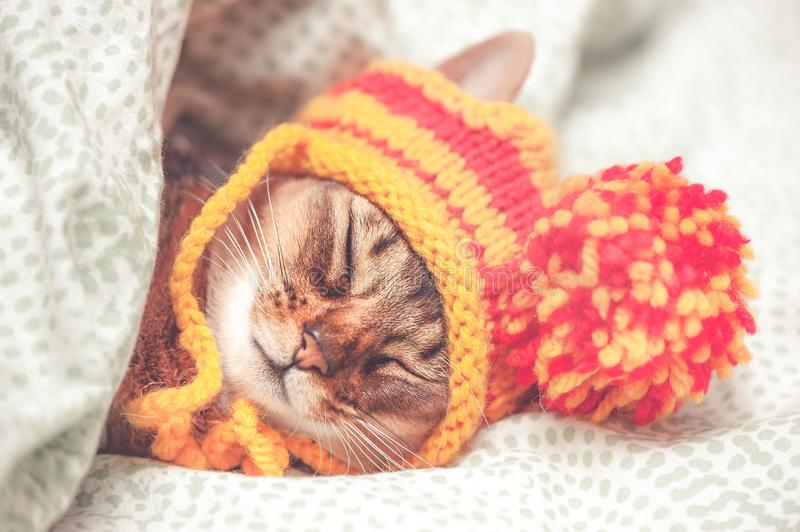 Portrait of a sleeping cat in a hat, the animal is sleeping, sick or relaxing. stock photo