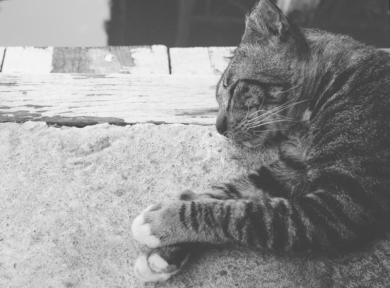 The portrait of sleeping cat. The portrait of sleeping cat on cement ground floor, monotone black & white shade in the mood of lonely, alone feeling royalty free stock photography
