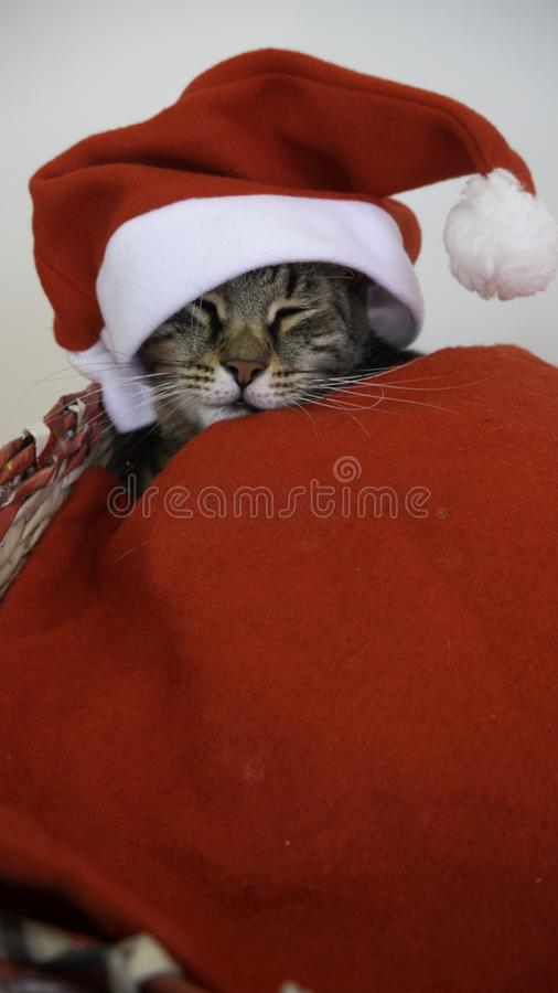 Portrait of a sleeping cat with red Santa Claus hat covered with a red blanket. Portrait of a sleeping cat with red Santa Claus hat covered with a red blanket royalty free stock images