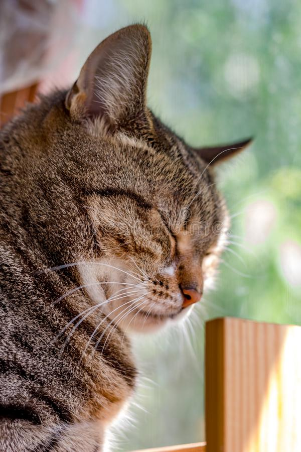 Portrait of a sleeping cat on a window background. Indoor stock photos