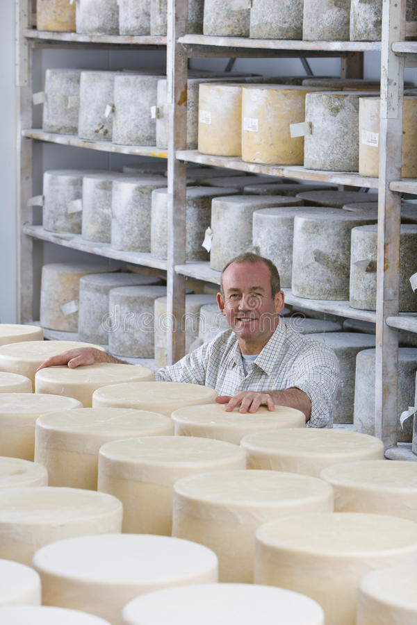 Portrait of smiling cheese maker in cellar with aged and young farmhouse cheddar cheese wheels stock photos
