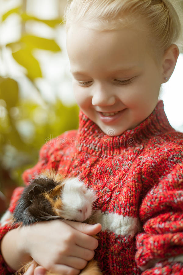 Portrait of smiling little girl looking at cavy stock images