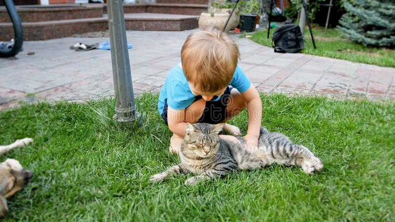Portrait of happy smiling 3 years old little boy caressing and playing with cat lying on the grass at house backyard. Portrait of smiling 3 years old little boy royalty free stock images