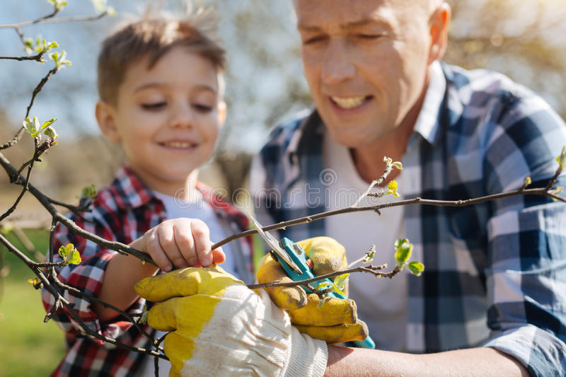 Portrait of son and father pruning fruit trees. Educative activity. Focused father wearing yellow rubber gloves teaching his charming son how to take care of stock image