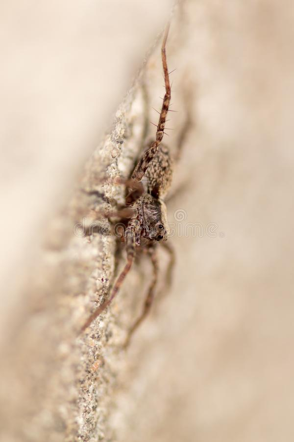Portrait of a spider on a concrete wall stock photo