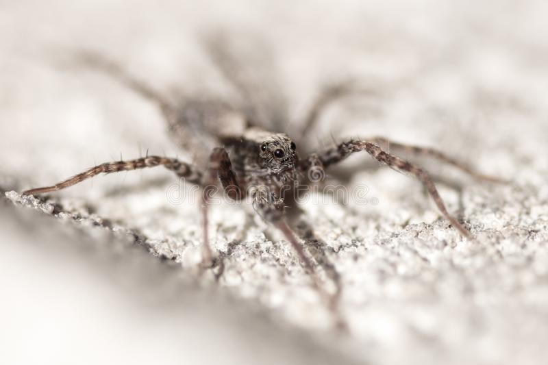 Portrait of a spider on a concrete wall stock photos