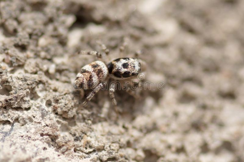 Portrait of a spider on a concrete wall stock images