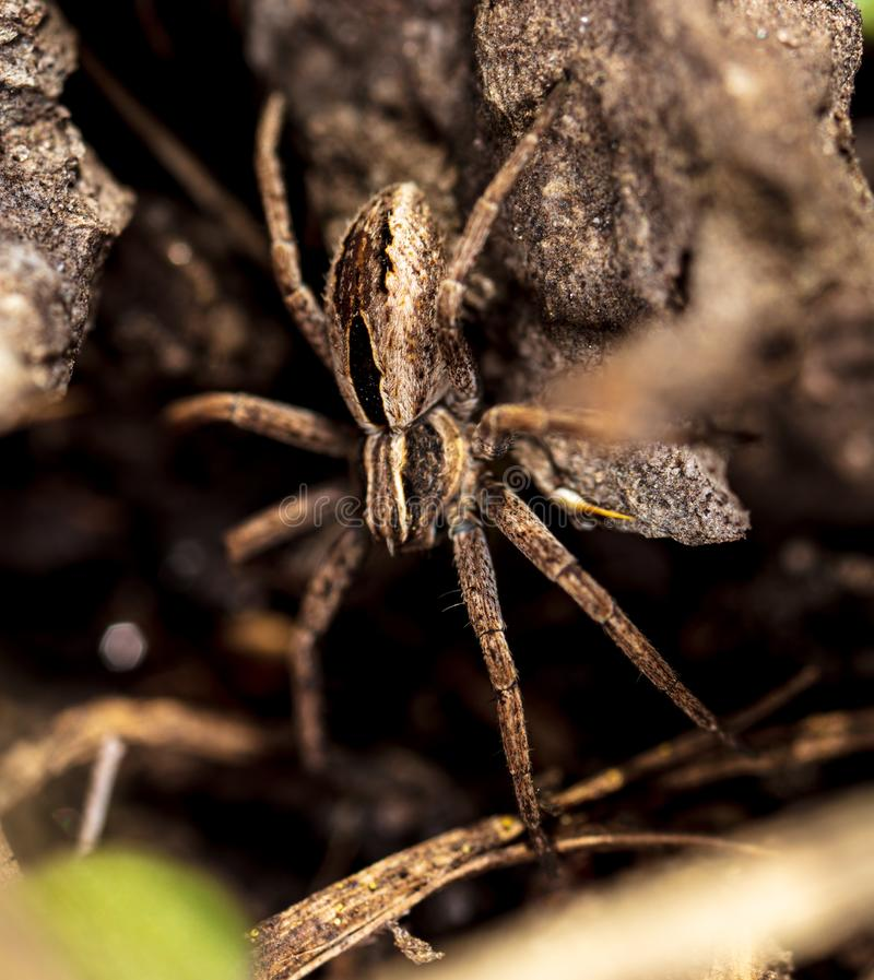 Portrait of a spider in the ground royalty free stock photos
