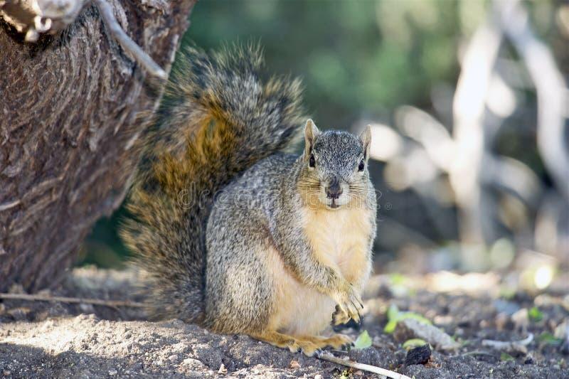 Portrait Of A Squirrel Stock Photo