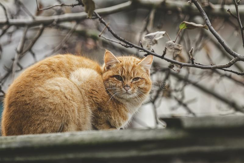 Portrait of a street red cat sitting and looking in old european city, animal natural background.  stock photos