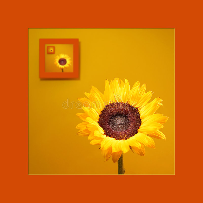 Portrait Of Sunflower royalty free stock photography