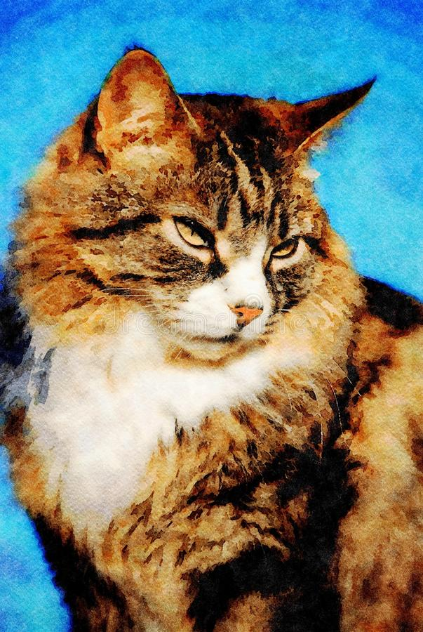 Portrait of a tabby cat stock photography