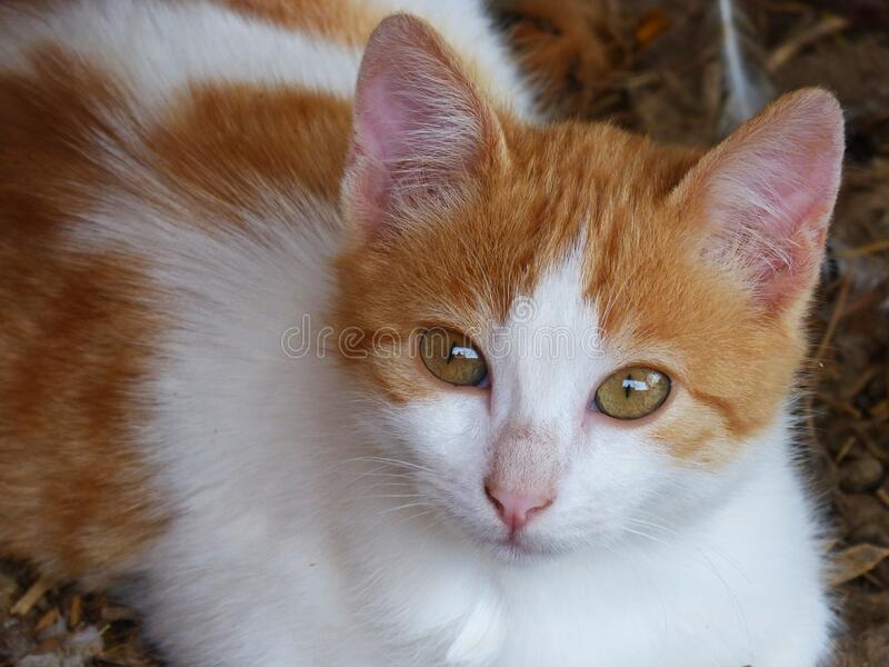 Portrait of tabby cat stock photos