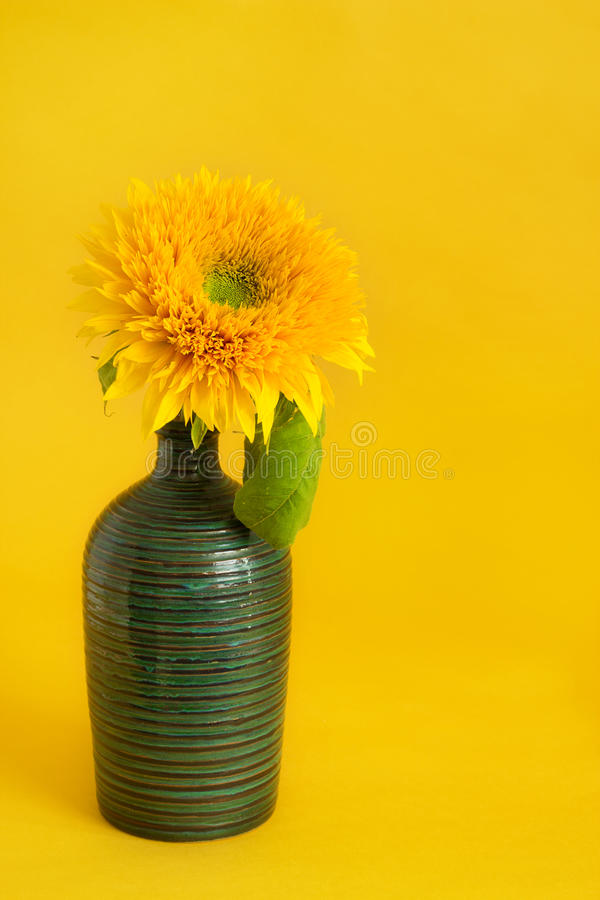 Download Sunflower stock photo. Image of color, summery, single - 29940174