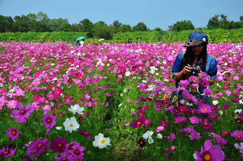 Portrait thaïlandais de femmes sur le gisement de fleurs de cosmos à la campagne Nakornratchasrima Thaïlande photos libres de droits