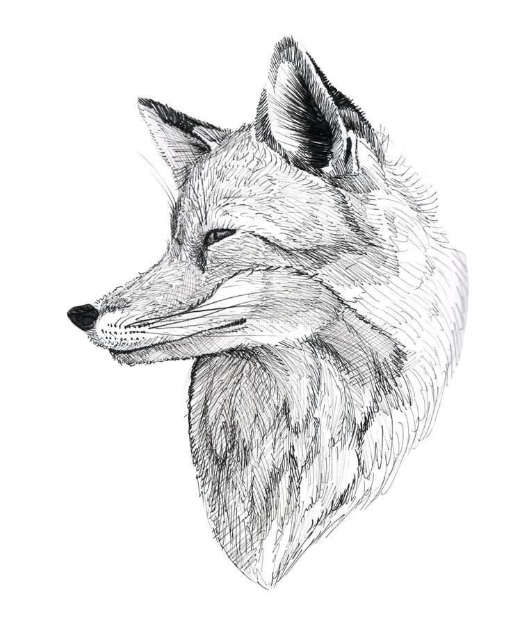 Portrait tir? par la main de Fox de tatouage ? l'encre noire illustration libre de droits
