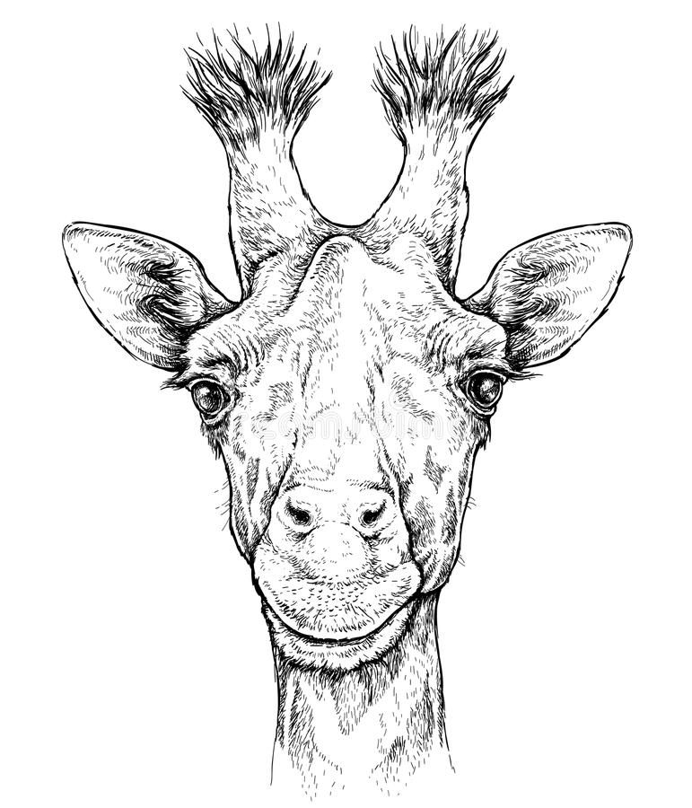 Portrait tiré par la main de girafe mignonne Illustration de vecteur d'isolement sur le blanc illustration de vecteur
