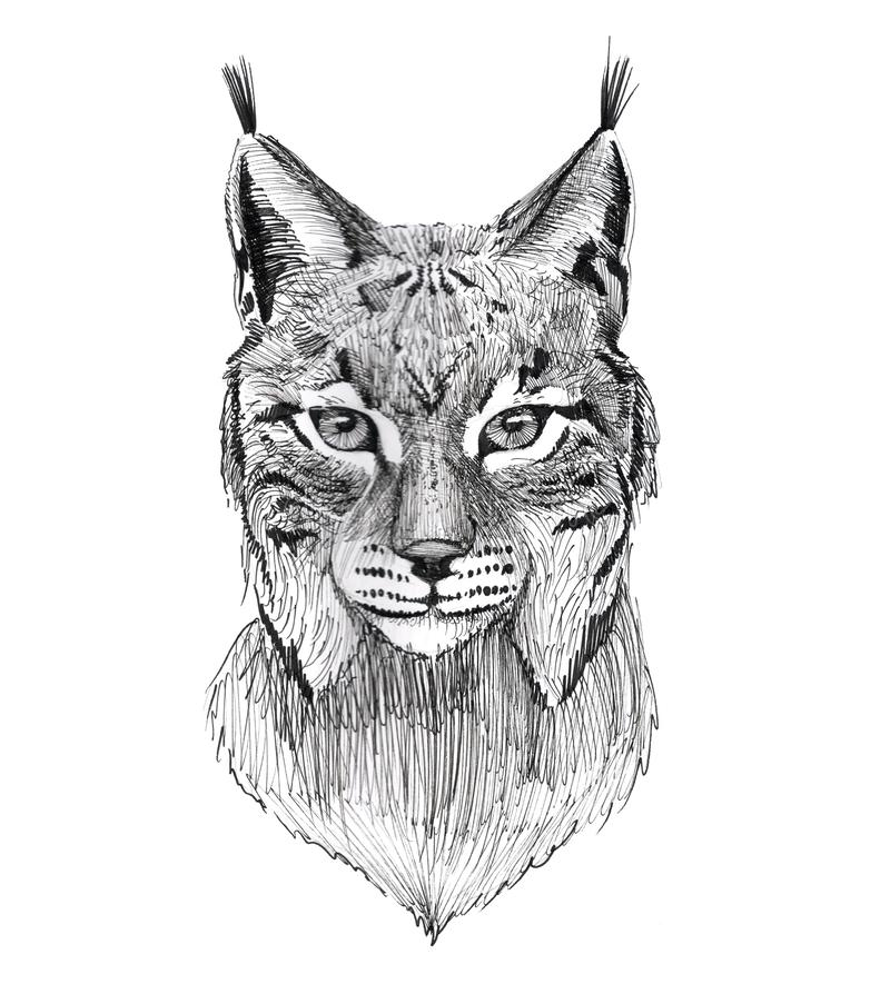 Portrait tiré par la main de Lynx de tatouage à l'encre noire illustration libre de droits