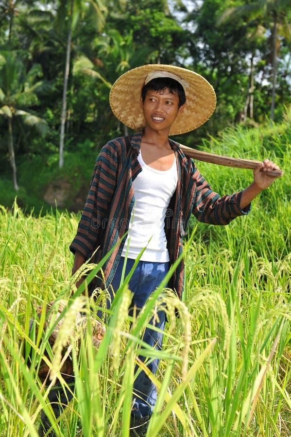 Asian rice farmer picture