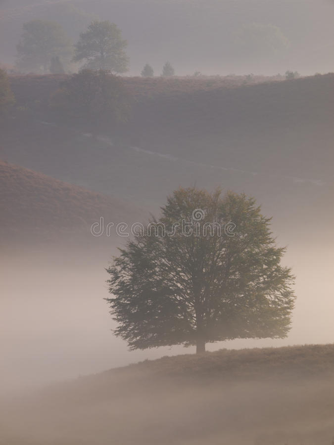 Download Portrait Tree Silhouette On Hill Stock Photo - Image: 26942240