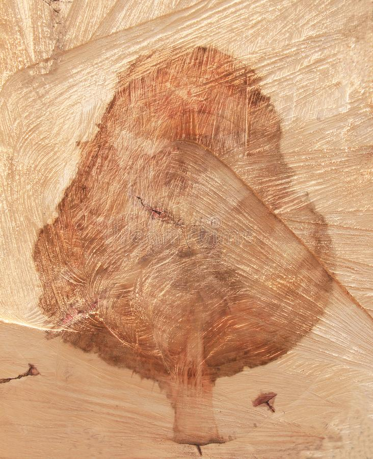 Portrait of a tree in a stump. Portrait of a precise geometric image of a tree in a stump of a sawn wood stock images