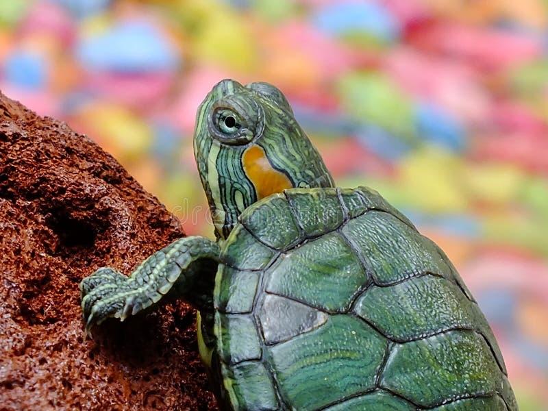 Portrait of turtle stock photo
