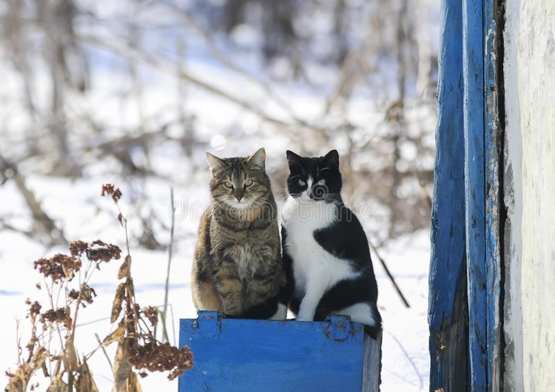 Portrait of two funny cute cat sitting outside on a Sunny spring royalty free stock photo