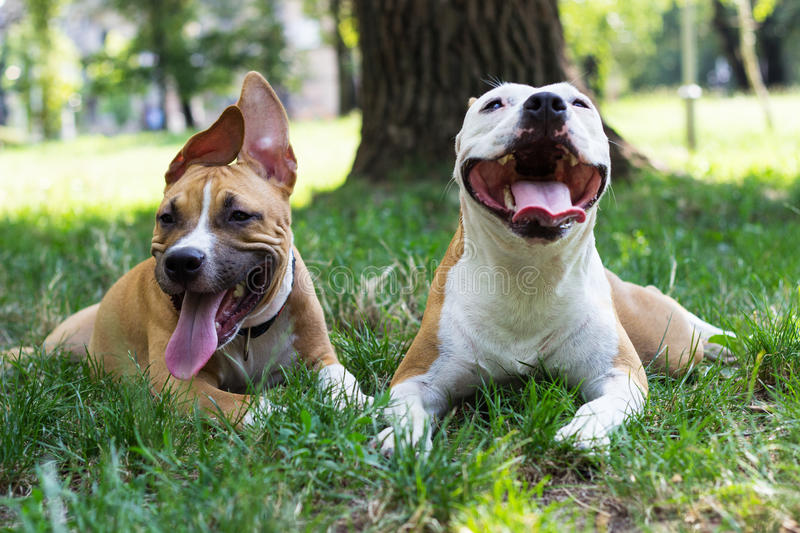 Portrait of two happy dogs in the park. Best friends stock photos