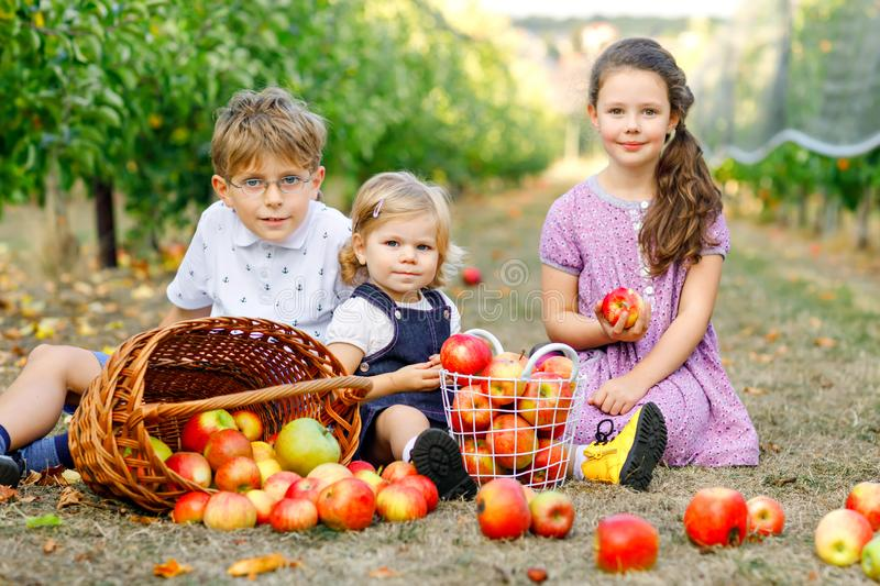 Portrait of two little girls and kid boy with red apples in organic orchard. Happy siblings, children, brother and royalty free stock photo