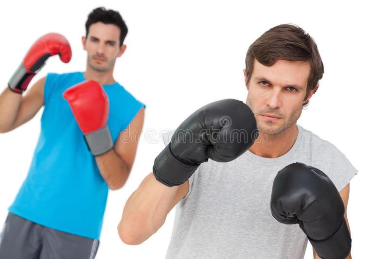 Portrait of two male boxers practicing royalty free stock image