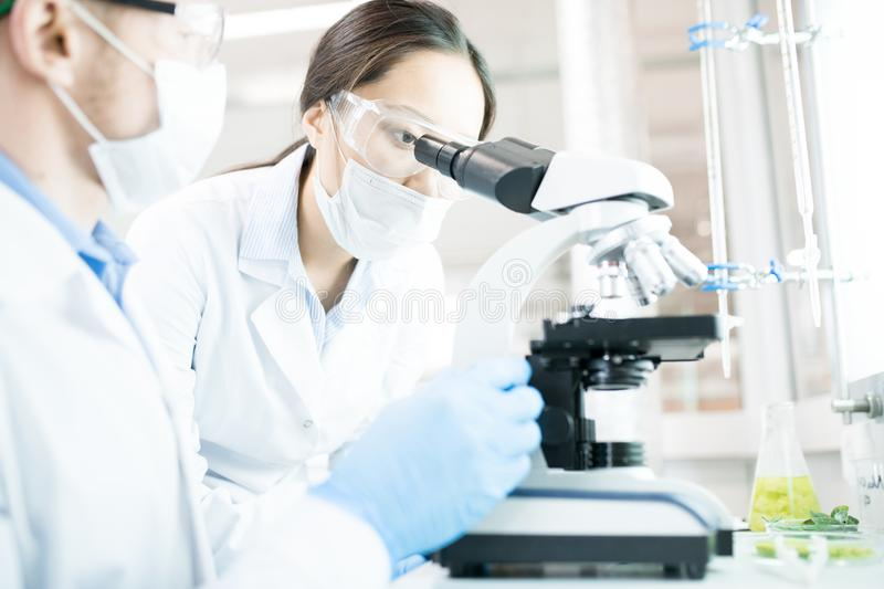 Female Scientist Working in Lab royalty free stock photography