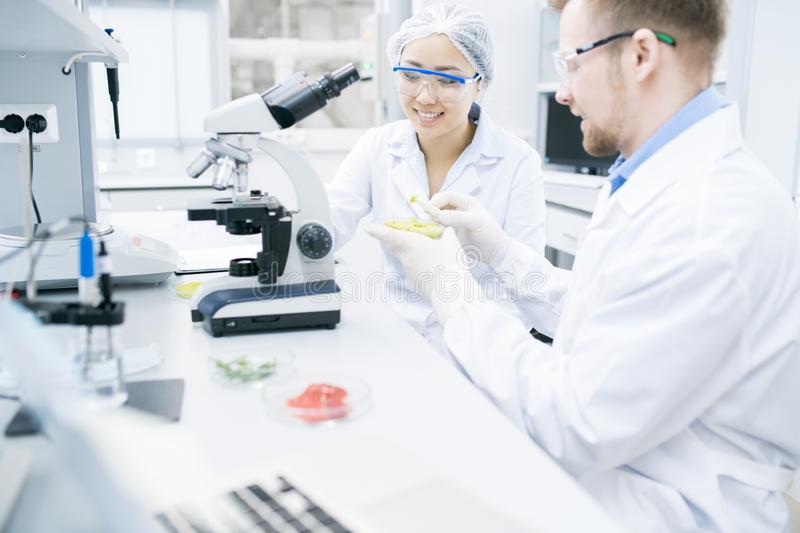 Two Cheerful Scientists Doing Research in Laboratory royalty free stock photography