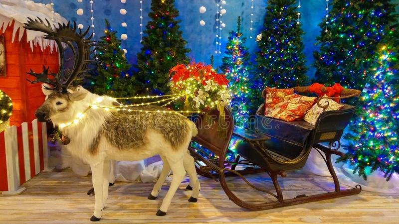 Two reindeers at the reign of Santa Claus with sled and christmas trees royalty free stock photos