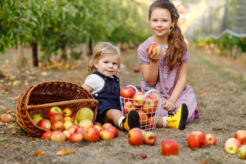 Portrait two siblings girls, little toddler and kid with red apples in organic orchard. Happy siblings, children stock image