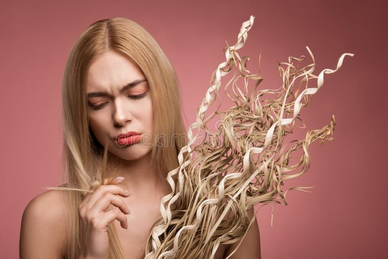 Sad girl dissatisfied with her hair. Portrait of upset woman holding bundle of dried grass and looking at her damaged tips of locks. Isolated on rose background stock image