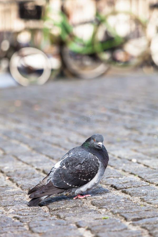 Portrait urbain d'oiseau photos stock