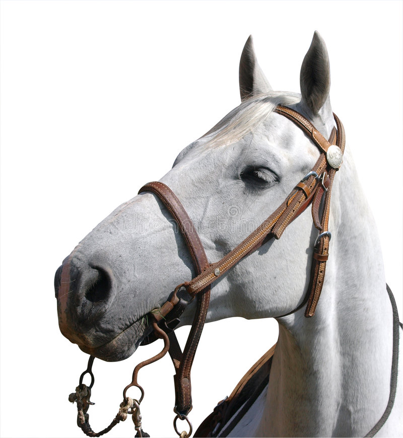 Portrait View of a Cowboy's Horse royalty free stock image