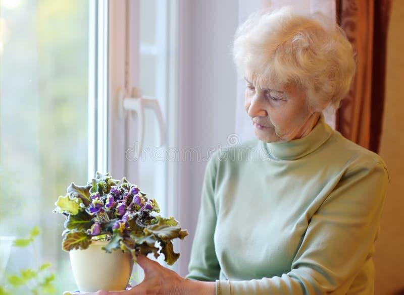 Portrait von schöner Seniorin mit lockig grauem Haar Ältere Menschen stehen am Fenster und kümmern sich um Hausblumen lizenzfreie stockbilder