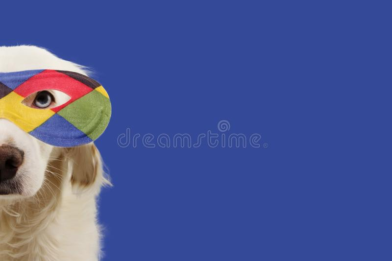 PORTRAIT WHITE DOG HARLEQUIN CARNIVAL MASK. FUNNY MIXED-BREED PUPPY WEARING A COLORFUL EYEMASK. ISOLATED STUDIO SHOT ON BLUE stock photos